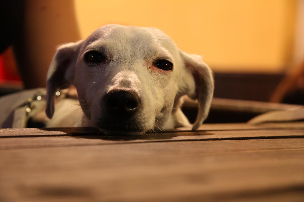 dog-968492_1280