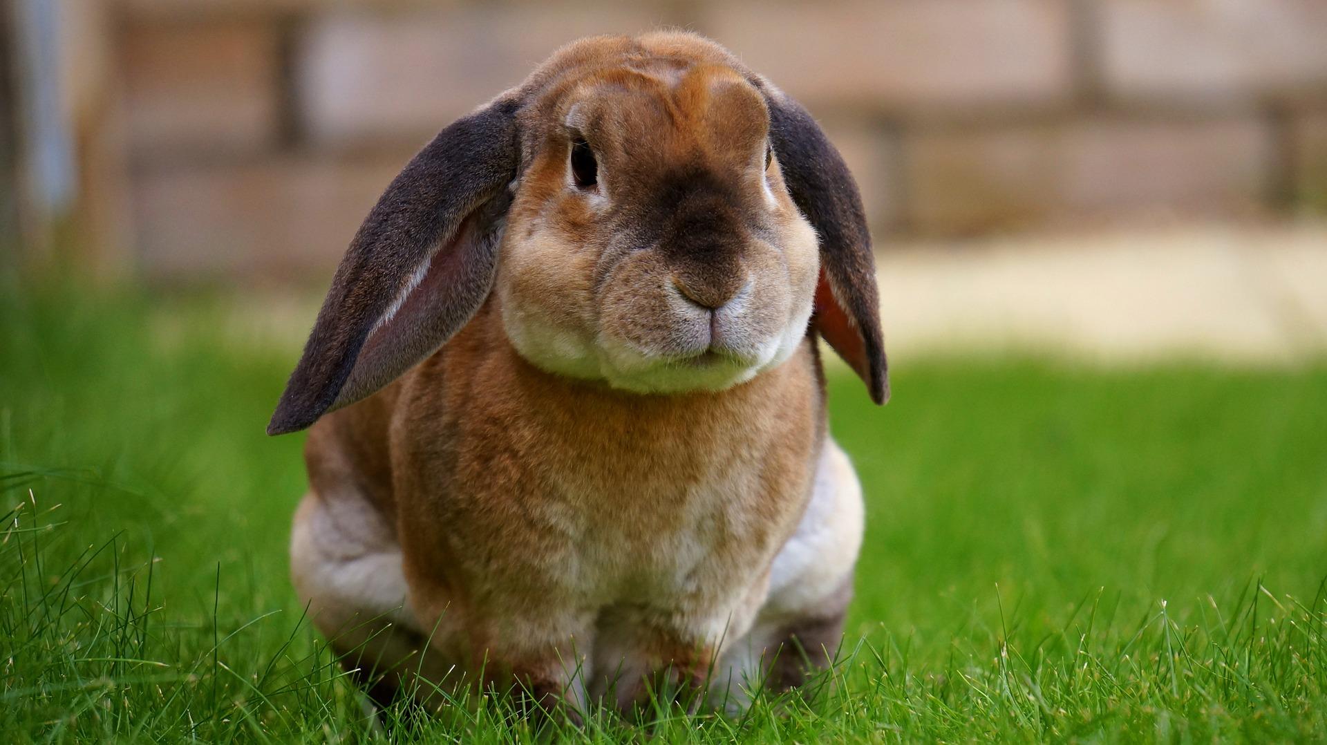 rabbit-1422882_1920
